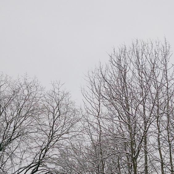s 雪の木
