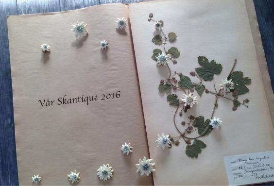 Skantique_2016春_DM_最終out